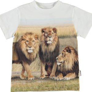 Molo Road 3 Lions